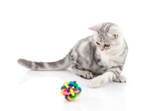 Cute tabby kitten playing toy Stock Photography