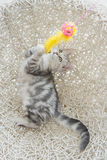 Cute tabby kitten playing toy Royalty Free Stock Photos