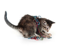 Cute tabby kitten playing with yarn Stock Photos