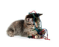 Cute tabby kitten playing with yarn Royalty Free Stock Image