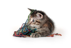 Cute tabby kitten playing with yarn Royalty Free Stock Photo