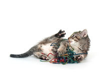 Cute tabby kitten playing with yarn Stock Image