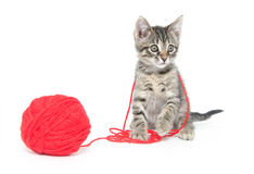 Cute tabby kitten playing with yarn Royalty Free Stock Photos