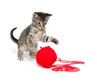 Cute tabby kitten playing with yarn Royalty Free Stock Photography