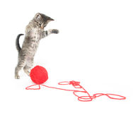 Cute tabby kitten playing with yarn Stock Photo