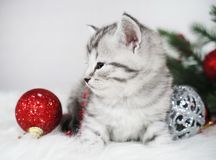 Cute tabby kitten with a red ball. Christmas kitten. Royalty Free Stock Image