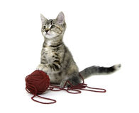 Cute tabby kitten with red ball of yarn Royalty Free Stock Images