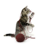 Cute tabby kitten with red ball of yarn Stock Images