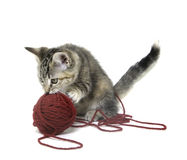 Cute tabby kitten with red ball of yarn Stock Image