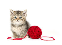 Cute tabby kitten with red yarn Royalty Free Stock Photo