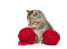 Cute tabby kitten with red yarn Royalty Free Stock Image