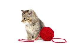 Cute tabby kitten with red yarn Royalty Free Stock Photography
