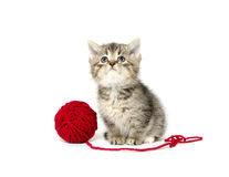 Cute tabby kitten with red yarn Royalty Free Stock Images
