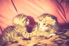 Cute Tabby Kitten Retro royalty free stock images