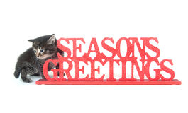 Cute tabby kitten and seasons greetings sign. Cute tabby cat sitting next to red seasons greetings sign on white background Stock Image