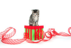 Cute tabby kitten sitting on gift box Royalty Free Stock Photography