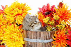 Cute tabby kitten sitting inside wooden barrel with flowers Royalty Free Stock Images