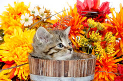 Cute tabby kitten sitting inside wooden barrel with flowers Stock Photos