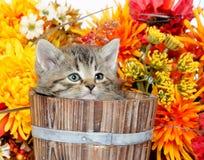 Cute tabby kitten sitting inside wooden barrel with flowers Stock Image