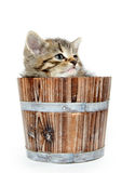 Cute tabby kitten sitting inside wooden barrel on white backgrou Royalty Free Stock Photography
