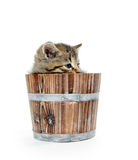 Cute tabby kitten sitting inside wooden barrel on white backgrou Stock Image