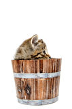 Cute tabby kitten sitting inside wooden barrel on white backgrou Stock Photos
