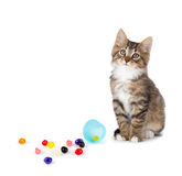 Cute tabby kitten sitting next to spilled jelly beans on a white Royalty Free Stock Photography