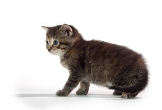 Cute tabby kitten sitting on whit Stock Images