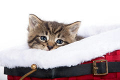 Cute tabby kitten in sled Royalty Free Stock Photography