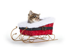 Cute tabby kitten in sled Royalty Free Stock Image