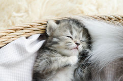 Cute tabby kitten sleeping Stock Photos