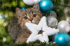 Cute christmas kitten with a snow star Royalty Free Stock Photos