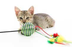 Cute tabby kitten toy play isolated Royalty Free Stock Image