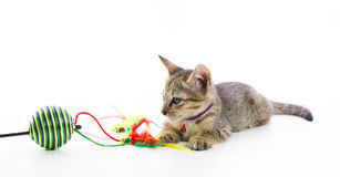 Cute tabby kitten toy play isolated Royalty Free Stock Images