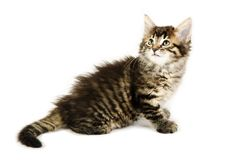 A cute tabby kitten turning her head on a white background. Stock Photography