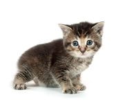Cute tabby kitten on white Royalty Free Stock Photos
