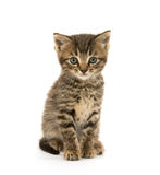 Cute tabby kitten on white Stock Photos