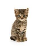 Cute tabby kitten on white Stock Photos