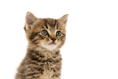 Cute tabby kitten on white Royalty Free Stock Images