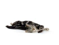 Cute tabby kitten on white Royalty Free Stock Photos