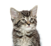 Cute tabby kitten on white Stock Image