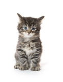Cute tabby kitten on white Royalty Free Stock Image