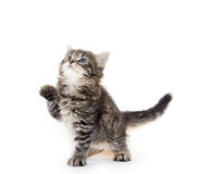 Cute tabby kitten on white background Royalty Free Stock Photography