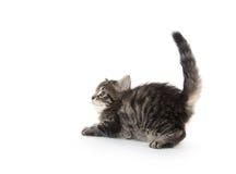 Cute tabby kitten on white background Stock Images