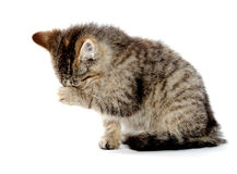 Cute tabby kitten wiping its eyes Royalty Free Stock Photo