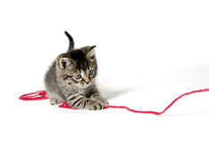 Cute tabby kitten with yarn Royalty Free Stock Images