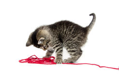 Cute tabby kitten with yarn Stock Photos