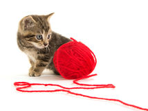 Cute tabby kitten and yarn Royalty Free Stock Image