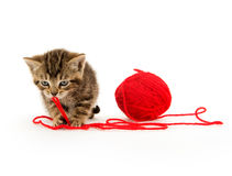 Cute tabby kitten and yarn Stock Photos
