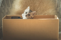 Cute tabby kittens  in a box Royalty Free Stock Image